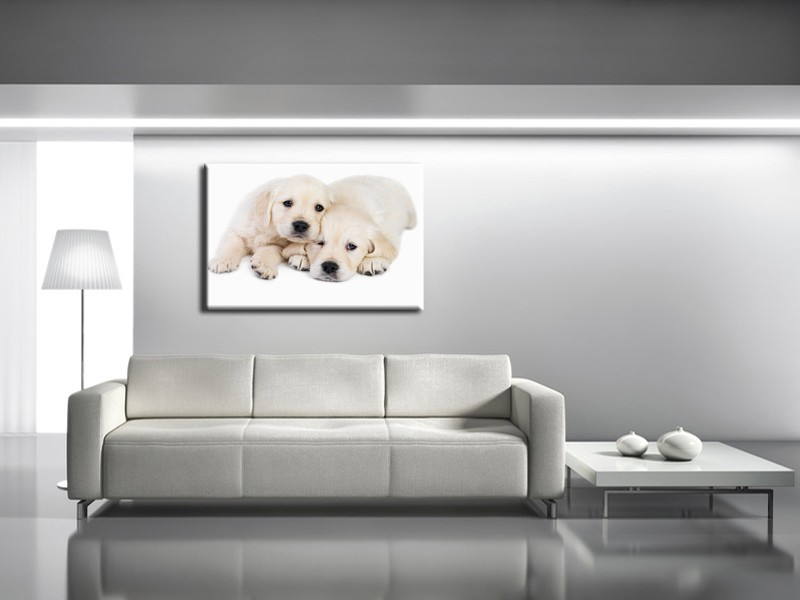 D coration murale animaux 2 for Decoration murale one piece