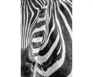 Décoration murale zebre