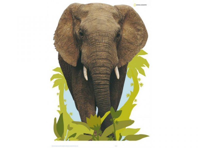 photo stickers muraux elephant